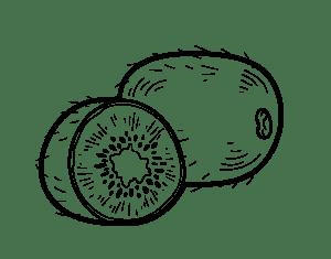 dibujo kiwi realista kiwi png